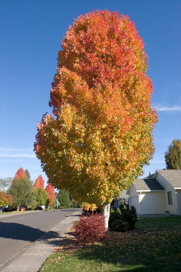 美国秋天风景图片大全